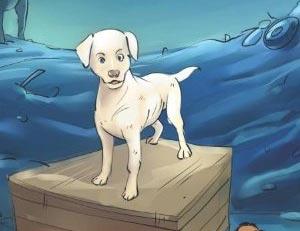 animal-adoption