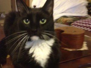 binky pet cat